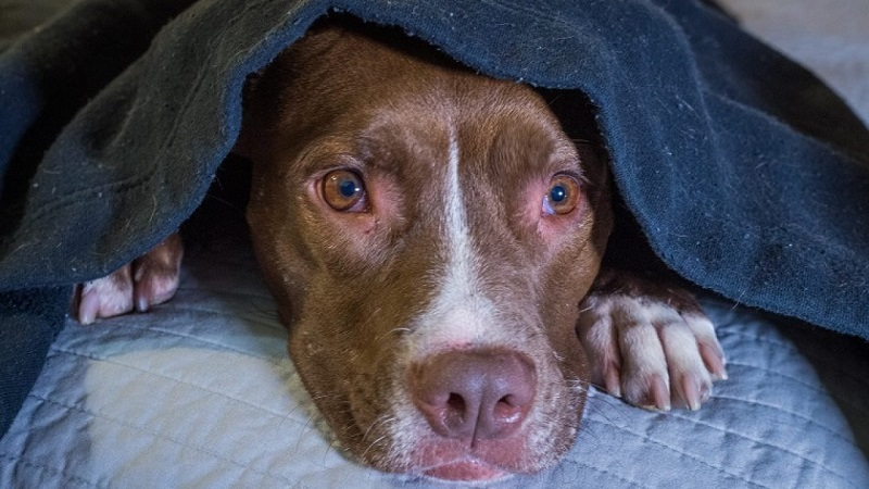 6 great tips to reduce fear of storms in dogs