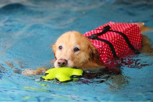 10 tips to cool your dog in the summer