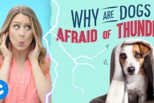 Dogs afraid of thunder