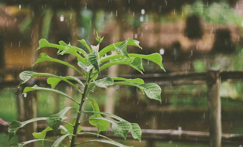 What effects does hail have on plants?
