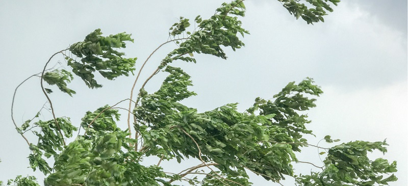 How to protect plants from strong winds?